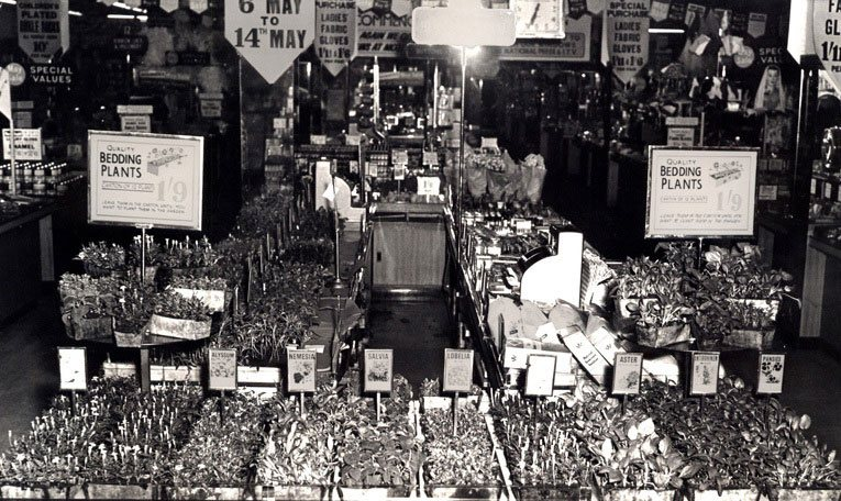 By the 1960s some gardening displays at Woolworth had begun to look old fashioned