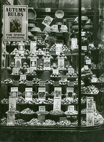 A window display promoting the wide range of Autumn Flower Bulbs that were available from Woolworth's in the 1930s, some as cheaply as three for one penny